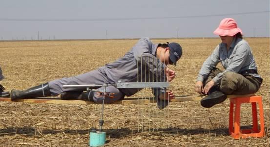 辽河三角洲杆形地面高程监测系统